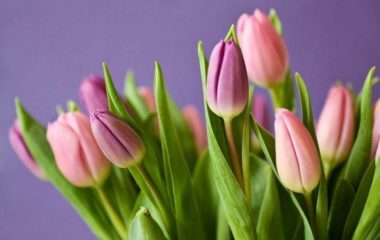 Bouquet of tulips to signify fertility and motherhood | PCRM Fertility Clinic Vancouver